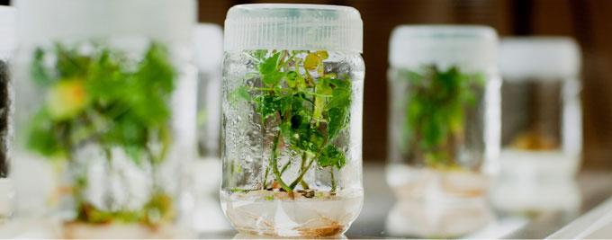 Hóa chất Duchefa- hóa chất nuôi cấy mô thực vật